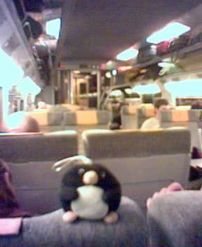 Penguin in the chunnel
